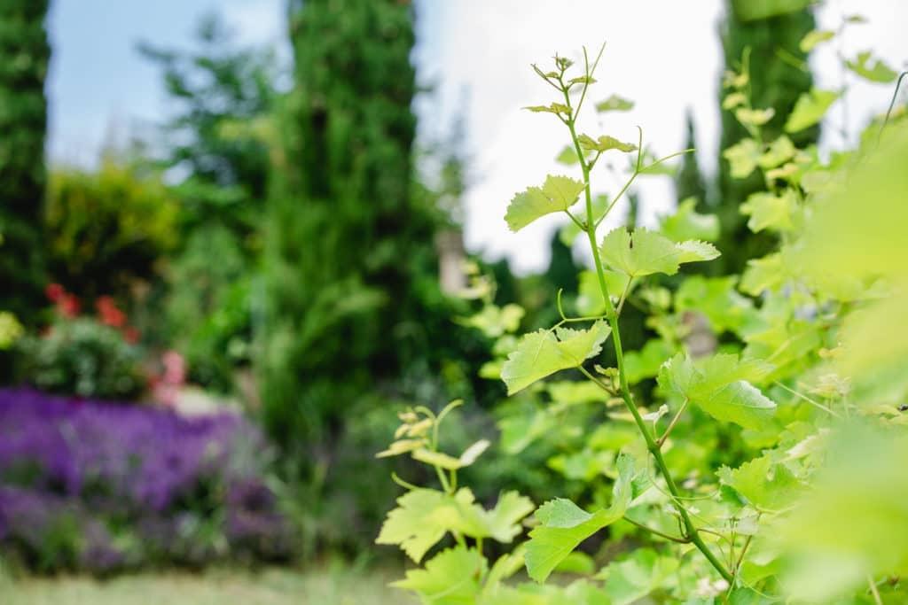 wine and gardens south styria garden polz renate austrianwines austriangardens