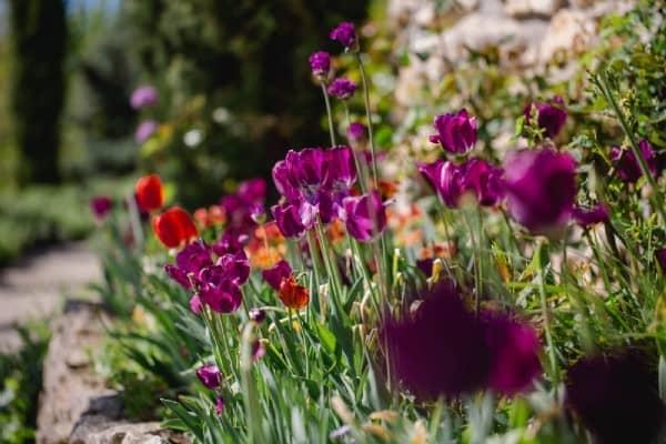 Jardin Polz Garten