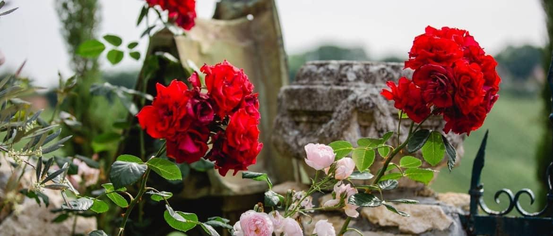 Polz Garten Rosen