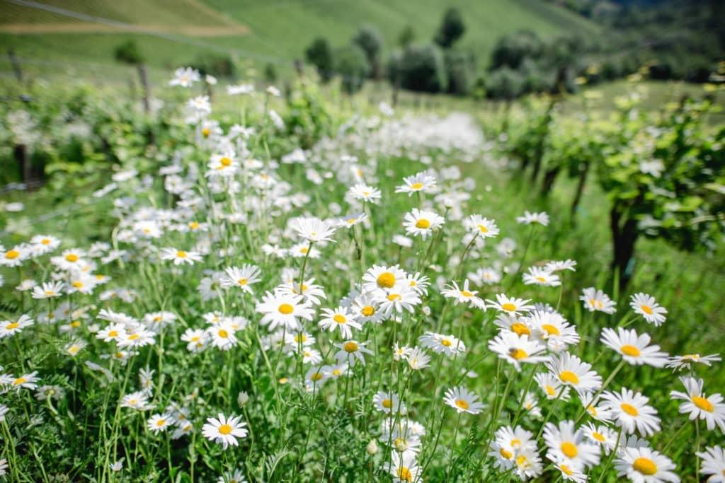 Finden Sie Kraft im Garten Polz in der Steiermark