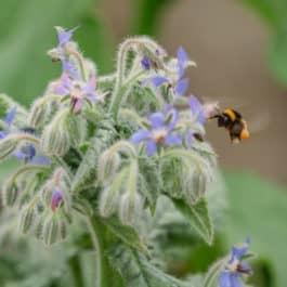 Natur gelebte Biodiversität mit Verantwortung Naturgarten Südsteiermark garten Polz kommentierte Gartenführungen mit Renate Polz