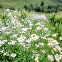 Südsteiermark Garten by Renate Polz mediterran garden wine and garden austrian garden steiermark garden energiegarten stressgarten therapiegarten naturcoach south styria