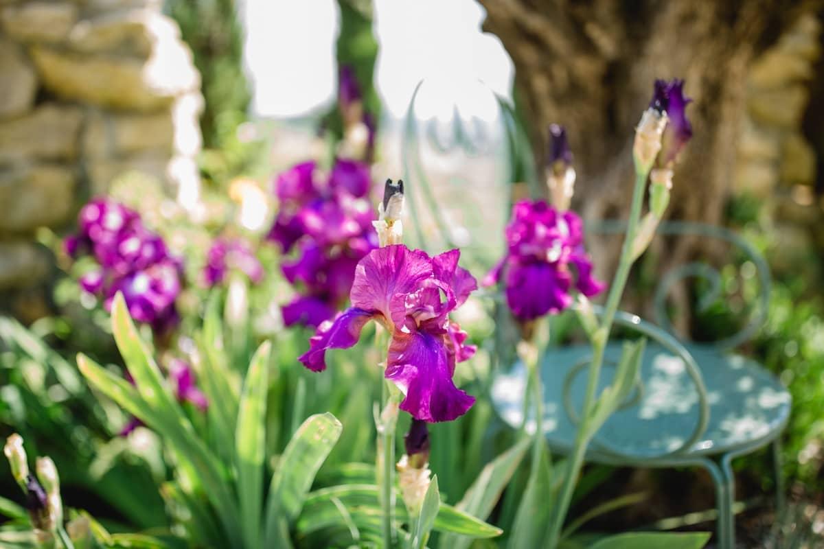 Farbenfrohe Blütenpracht im Garten Polz in der Südsteiermark