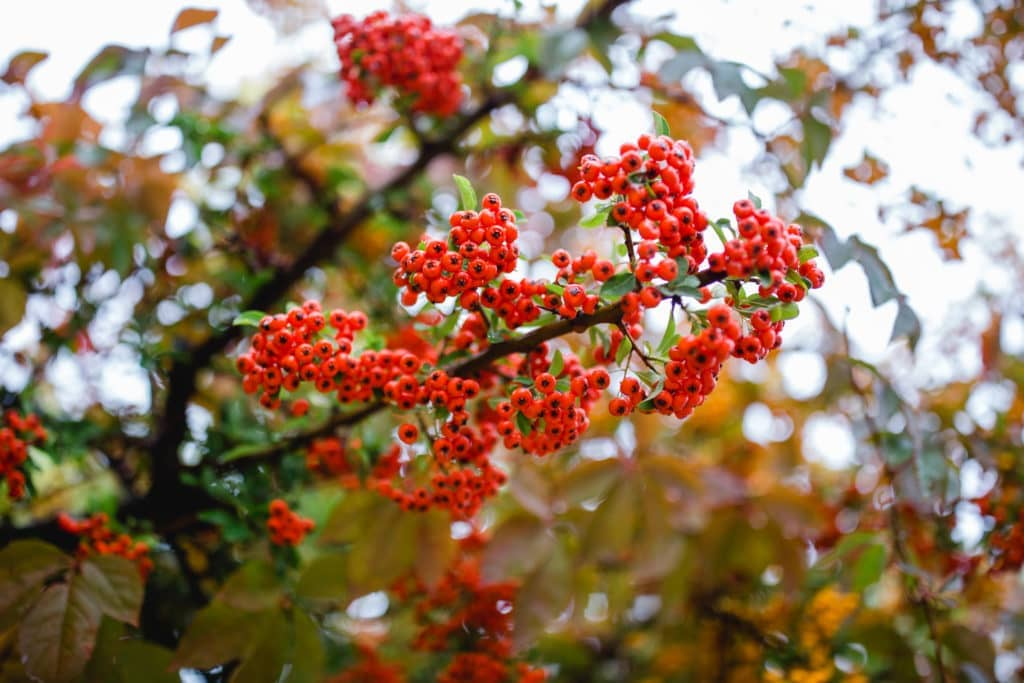 Herbst Südsteiermark Garten