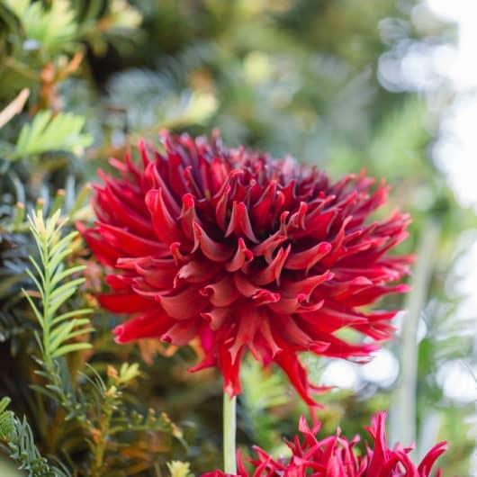 @Südsteiermark Polz Garten Pflanzencoach Natucoach Herbstliche Gartenzeitführungen austria gardens steiermark garten