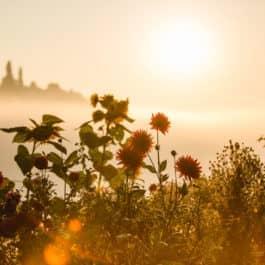 Herbst im Südsteiermark Garten Polz Toscanastimmung am Hochgrassnitzberg