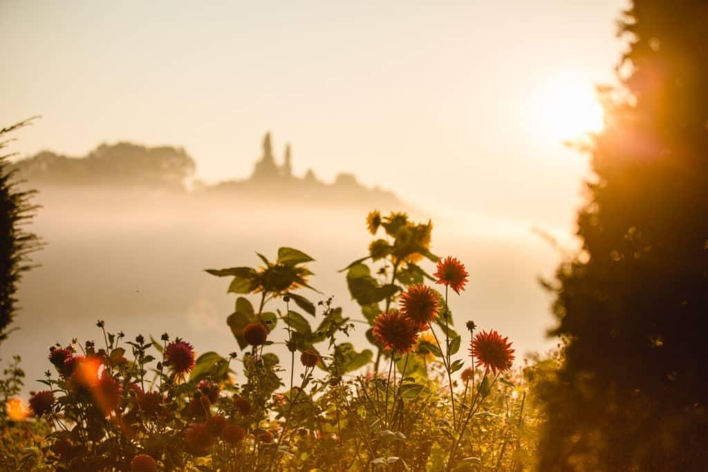 Herbst Südsteiermark Garten Polz Toscanastimmung mit Morgensonne