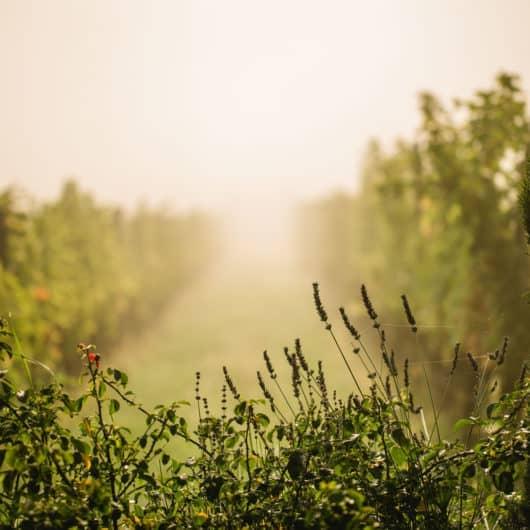 @Polz Garten Renate Polz Naturcoach Humanenergetik Energetik Healing Codes Meditation Erden Aura Coaching Familienaufstellung Tetralemma Stressbewältigung Trauerbegleitung wineandgardens wine and garden steiermark garten austrian garden