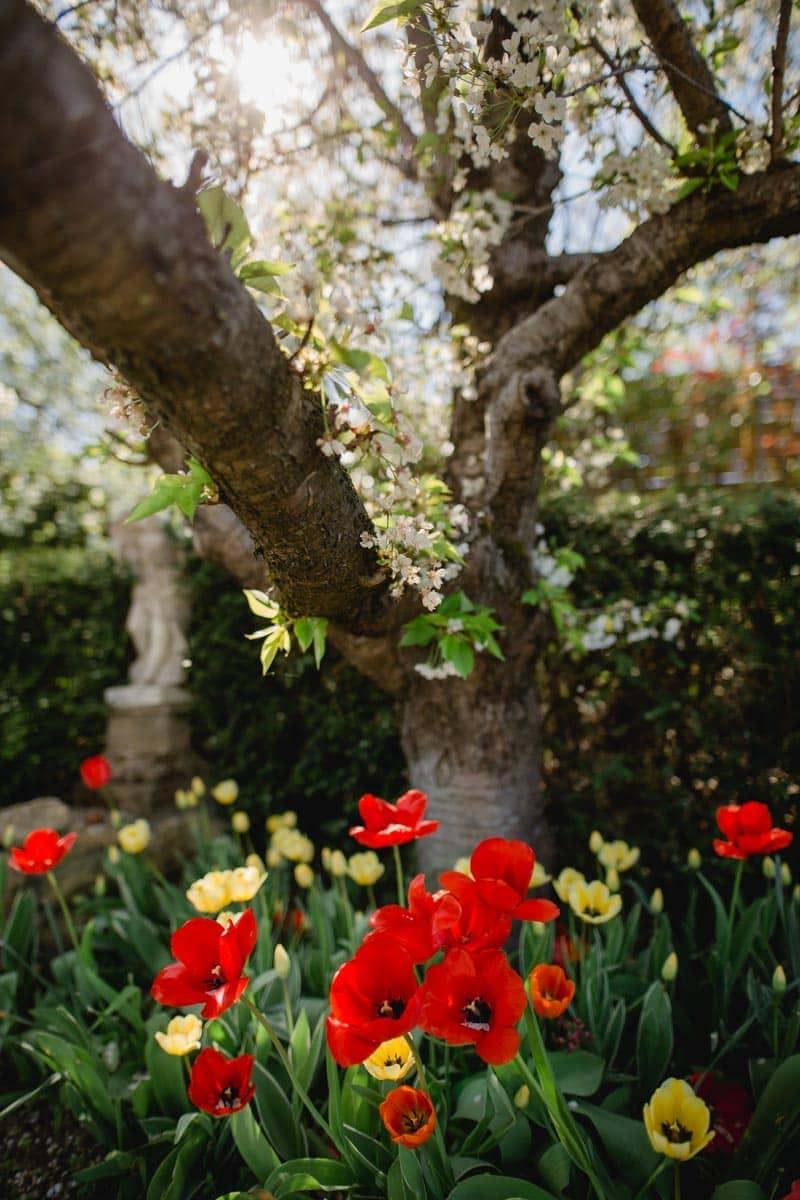 Frühling im Südsteiermark Garten Polz Tulpenpracht Steiermark