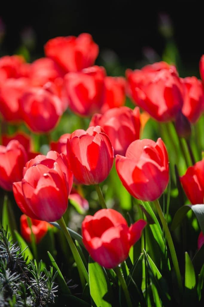 Steiermark Frühling im Südsteiermark Garten Polz Steiermark Frühling im Südsteiermark Garten Polz