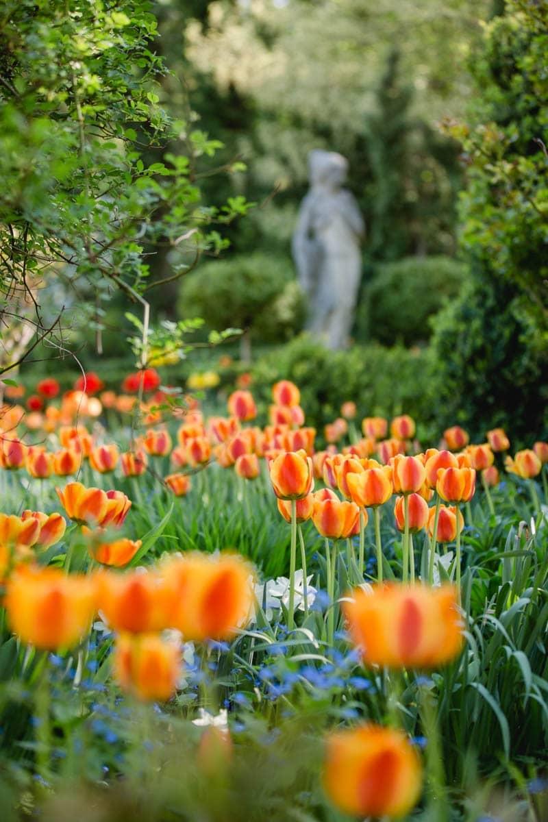 Frühling Südsteiermark Garten Polz Tulpenpracht Steiermark