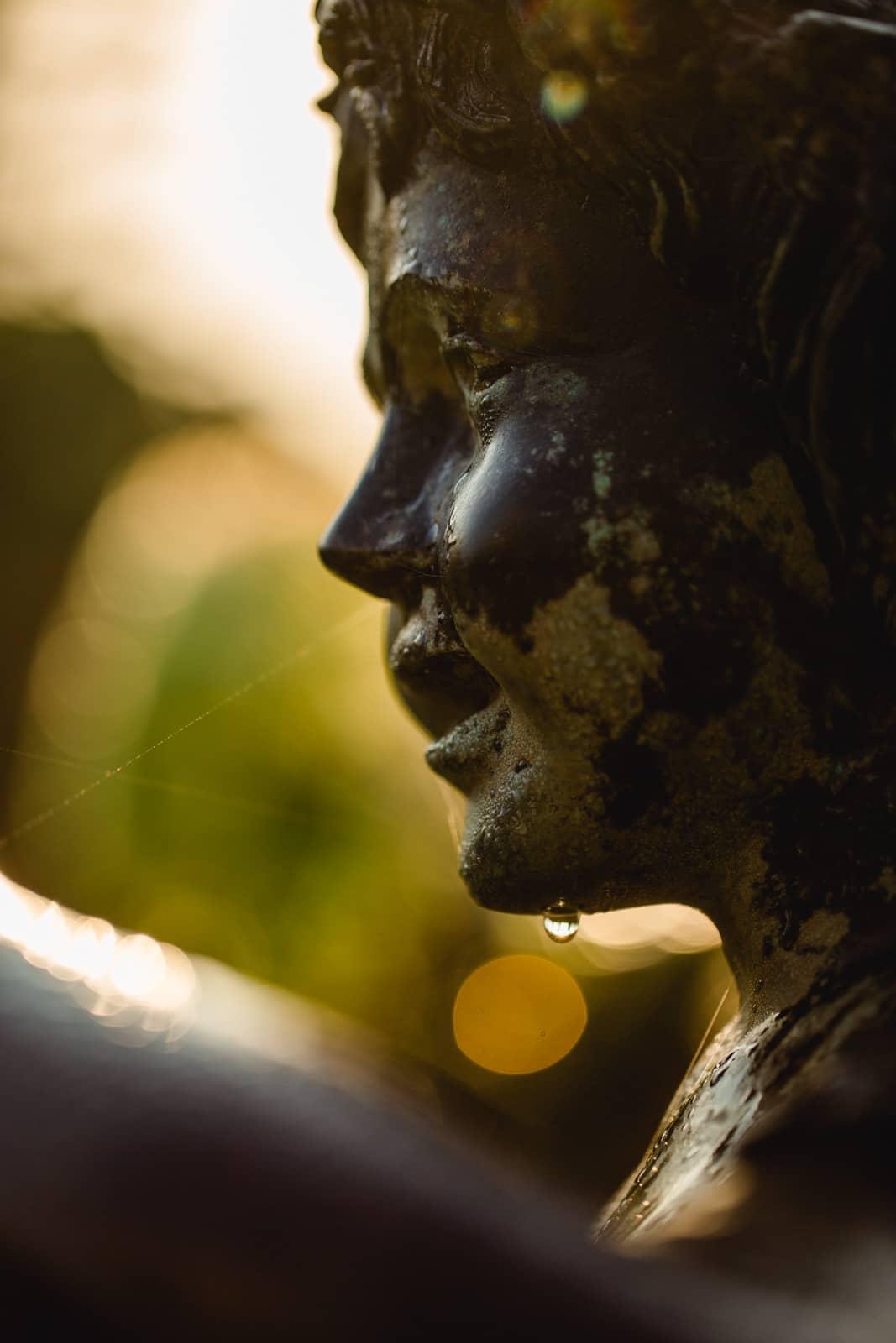 Südsteiermark Garten Polz Pan im herbstlichen Novemberstimmung und Tautropfen