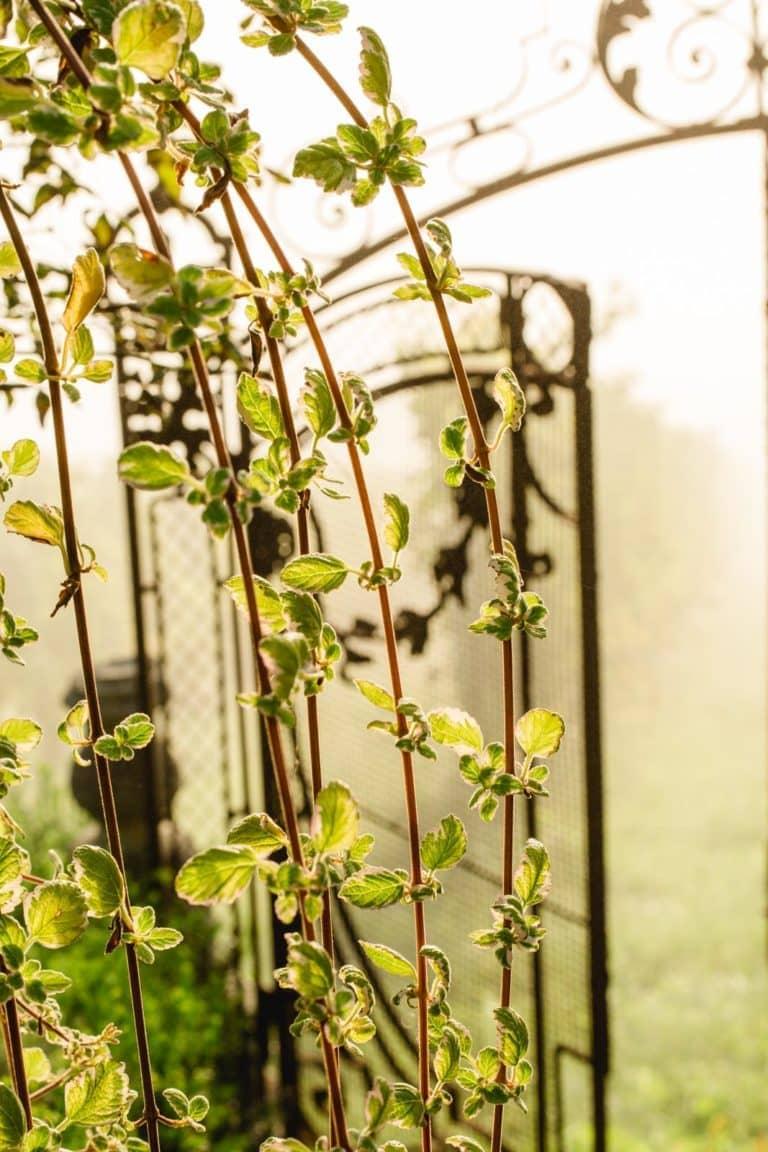 Südsteiermark Garten Herbstfeeling Abgang zum Sauvignon Blanc