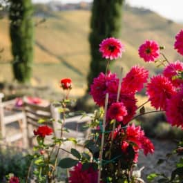 """ Nature seduces us with all its colours, as far as the eye can see. Flora unveils its secrets to those who love its treasures.Synergies extend over 4 levels that are bound together by the stone walls of the single-vineyard sites Hochgrassnitzberg, Obegg, and Grassnitzberg. Come with me and enjoy this patch of paradise and learn more about the symbiosis of landscape, nature, passion, and terroir."