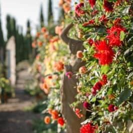 @Süpdsteiermark Garten by Renate Polz wineandgardens wine and garden austrian garden south styria steiermark garten herbst südsteiermark patentamt Kl.16