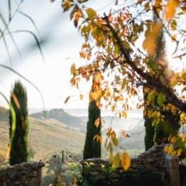 @Südsteiermark Garten Polz Herbststimmung steirische Toskana Gartenhochzeit im @Südsteiermark Garten von Renate Polz mediterrane Gartenstimmung Provence und Toskana vereinigt inmitten der weinberge am Hochgrassnitzberg austrian weddings gartenhochzeit österreich schönste location im privaten rahmen gayweddings Trauung im Freien