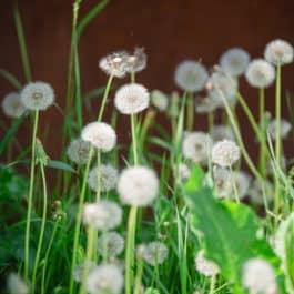 @Polz Garten Renate Polz Naturcoach Humanenergetik Energetik Healing Codes Meditation Erden Aura Coaching Familienaufstellung Tetralemma Stressbewältigung Trauerbegleitung