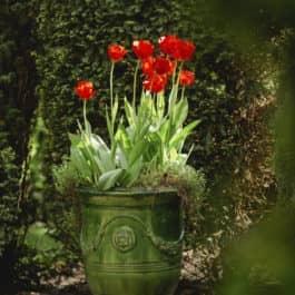 @Südsteiermark Garten Kommentierte Gartenführungen botanisch inmitten der Weinberge am Hochgrassnitzberg mit Renate Polz austria gardens steiermark garten