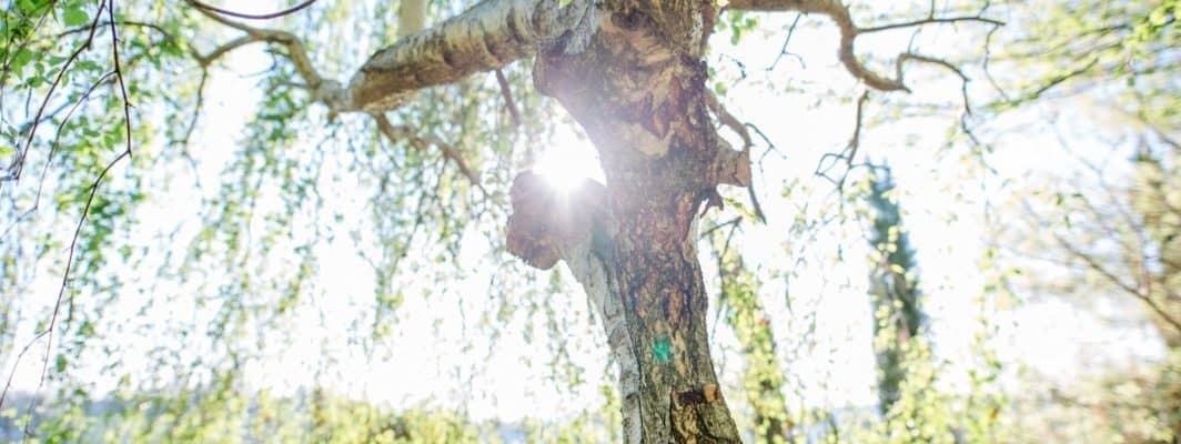 Weinberg & Gartenleben Morgenführungen mit Renate Polz austria gardens steiermark garten naturgarten südsteiermark erleben am hochgrassnitzberg
