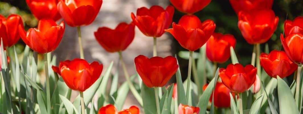 Das Leben Weinberg & Garten Südsteiermark Garten Blog by Renate Polz austria gardens