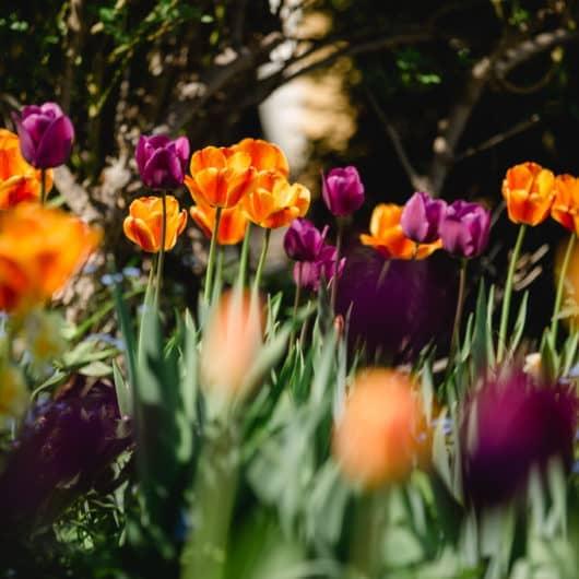 @Südsteiermark Garten Polz Renate Gartenführungen & Terroir im Weinberg austria gardens steiermark garten erlebnis gartenreich
