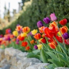 Patentamt @ Südsteiermark Polz Garten & @Renate Polz Garten austria gardens steiermark garten südsteiermark by renate polz gartenführungen naturcoach familienaufstellungen stressbewältigung