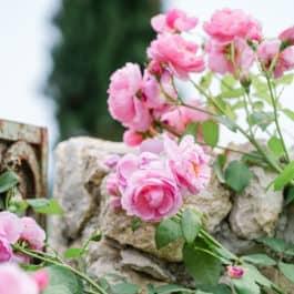 @Südsteiermark Garten by Renate Polz Lavendelduft entlang der Muschelkalkmauern am Hochgrassnitzberg Aromen und errliche Düfte begleiten jeden Besucher Der Duft des lebendigen Weinbergs austrian gardens steiermark garten wineandgardens
