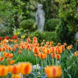 austria gardens garden of austria styria @Marke Südsteiermark Garten by renate polz Frühling der tausenden Tulpen