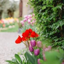 @R. Marke Südsteiermark Garten Polz Kommentierte botanische Gartenführungen und energetische Gartenführungen mit Renate Polz Weinberg & Garten austria gardens steiermark garten einzigartiger mediterraner Garten auch für Gartenhochzeit Energetik und Naturcoaching