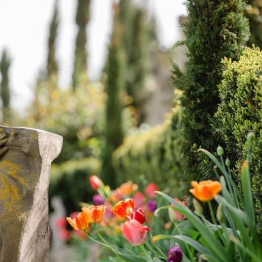 Südsteiermark @Südsteiermark Garten by Renate Polz Zypressenallee mit der herrlichen Tulpenblüte Frühling im Weinland Botanische Terroirführungen Und energetische Coaching Arbeiten in der Seelenzeit