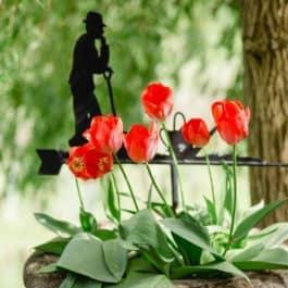 @Südsteiermark Garten Polz Renate Energetik Familienaufstellung Tetralemma Naturcoaching Energetische Arbeiten in der liegenden Acht Krisen & Stressbewältigung Humanenergetik Österreich Steiermark Seelenzeit