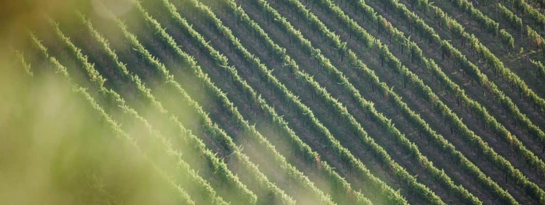 @Polz Renate Weinberg Sauvignon Blanc wineandgarden wine and gardens hochgrassnitzberg south styria Weingarten