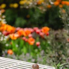 Weinbergschnecke beim kleinen Seerosenteich @Südsteiermark Garten Polz by renate Polz Lebendiger Weinberg Biodiversität