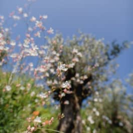 @Südsteiermark Garten by Renate Polz mediterran garden wine and garden austrian garden steiermark garden energiegarten stressgarten therapiegarten naturcoach south styria wineandgardens austrian gardens steiermark garten patentamt Kl. 16