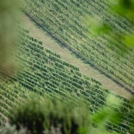 @Südsteiermark Garten by renate polz gartenhochzeit wedding weinberg wine and gardens freie Trauung im Steiermark Garten inmitten der Weinberge am Hochgrassnitzberg austrian gardens toscana garden