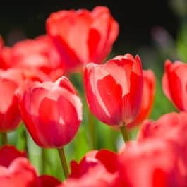 Schnell, sicher Buchung der Gartenführungen, Terroir, Weinberkostung Seelenzeit Coaching Naturcoaching Energetik Quantenphysik Tetralemmaaufstellung meditation, Seelenarbeit mit Renate Polz im Südsteiermark Garten Polz