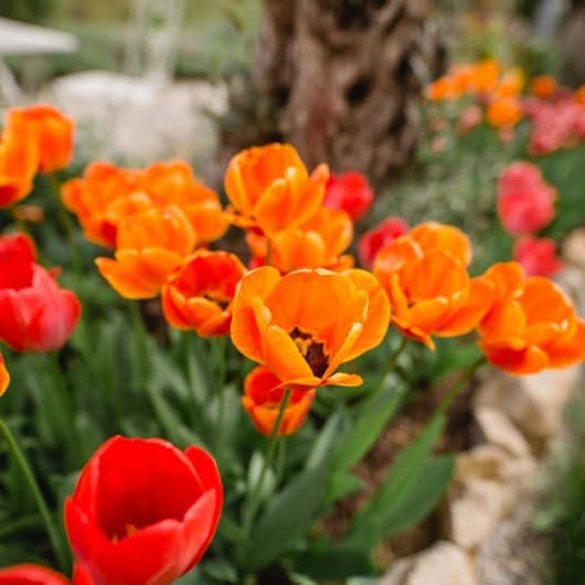 Ehe für Alle Gartenhochzeit im Polz Garten @Südsteiermark Garten Patentamt geschützte Marke Wedding Gardenwedding Freie trauung Ökologisch Nachhaltig Seelengarten Biogarten Umwelt Zukunft
